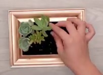 DIY Succulent Frame Planter