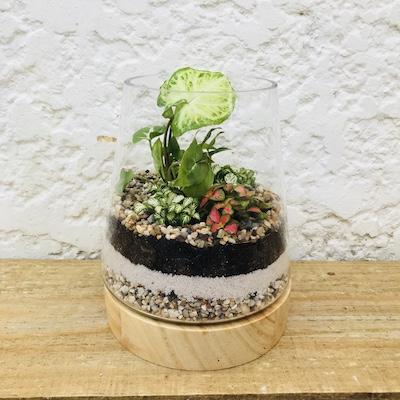 Terrarium Wood Base Plant Gift