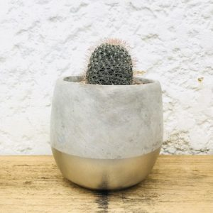 Cactus Cement Silver Plant Gift