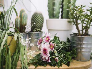 Pot Me Pretty - plant gifts online