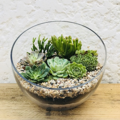 Open Terrarium Large Plant Gift