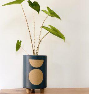 Alocasia Zebrine Plant in Slate Pot