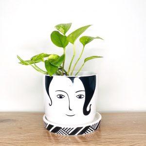 Indoor Plant in Face Pot Brisbane