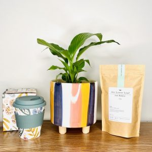 potted plant gift pack tea