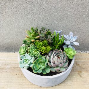 Succulent Gift Arrangement