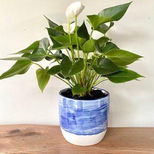 Flamingo Flower Ceramic Blue Pot