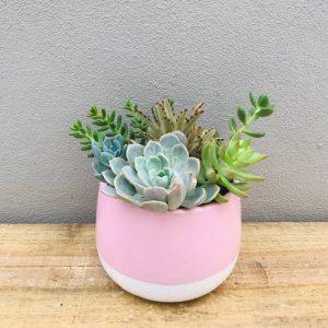 Pastel Pink Succulent Ceramic Pot