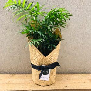 palour palm wrapped kraft paper with ribbon