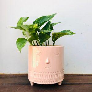 Pothos in Miss Blossom Pot