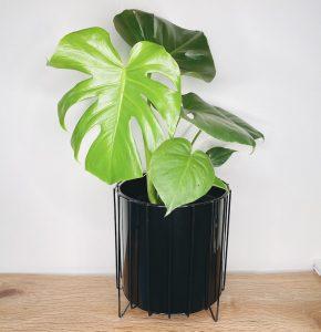 Monstera Black Planter Delivered
