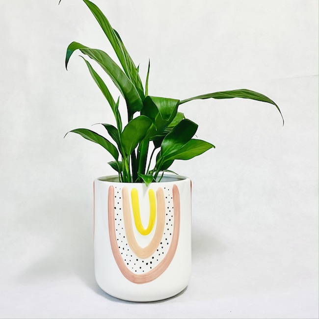 Peace Lily in Amber Pot
