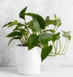 Top Low light plants