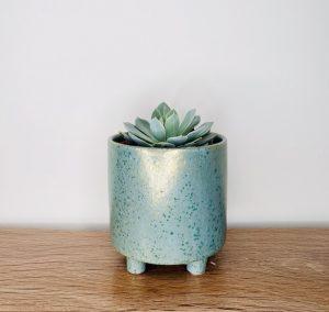 Succulent Potted Plant Brisbane