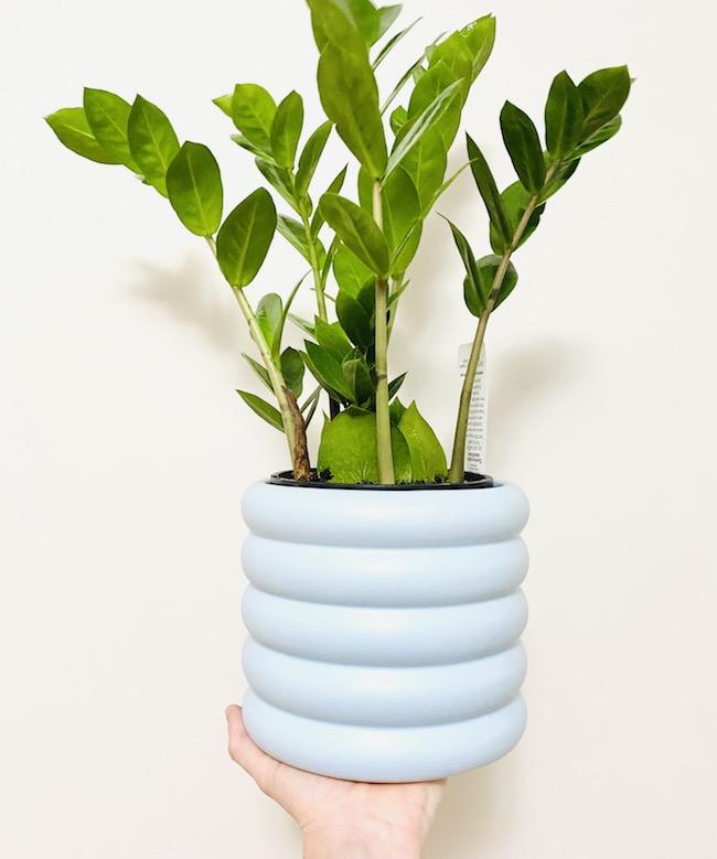 ZZ Plant in Eloise Pot