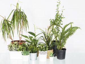 Plant gift brisbane