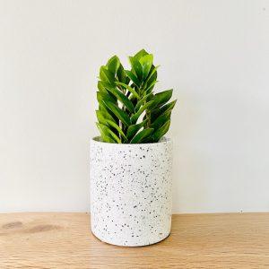 ZZ Plant in White Planter